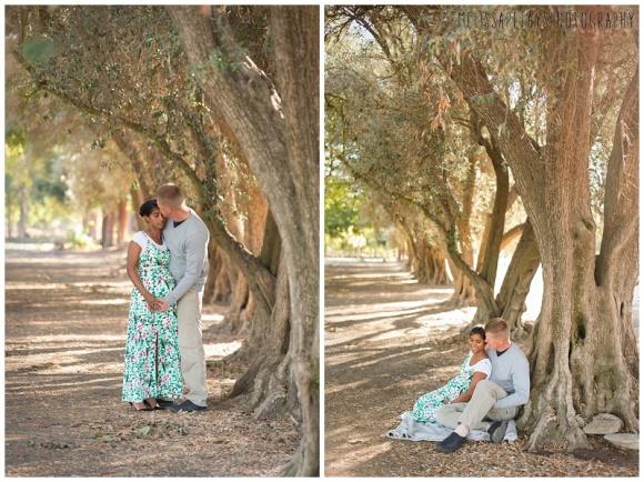 """olive grove image"""